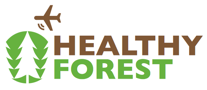 healthy_forest